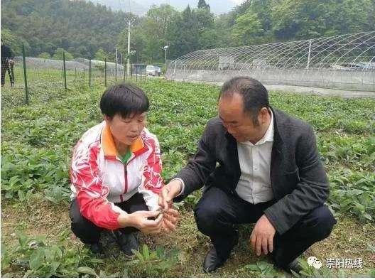 崇阳县大力发展中药材 培育特色增长极