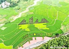 崇阳:彩色稻田扮靓美丽乡村