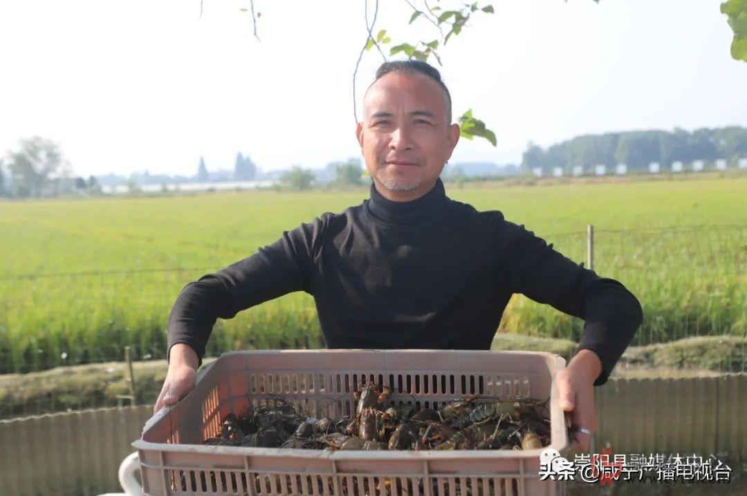 崇阳华陂村首次引进澳洲淡水虾,个头与矿泉水瓶一般高